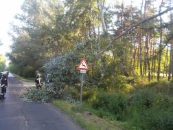 Lehasadt egy faág Debrecen és Hosszúpályi között