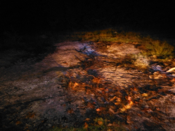 Hajnali tűz Nyíradonyban