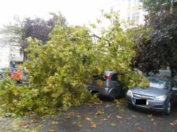 Lehasadt faágak parkoló autóra