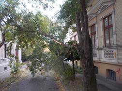 Kidőlt fa, és lehasadt ágak Debrecenben